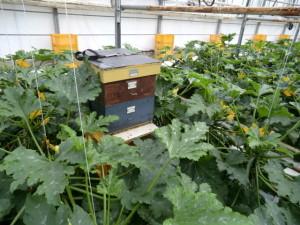 Bestuiven met bijen